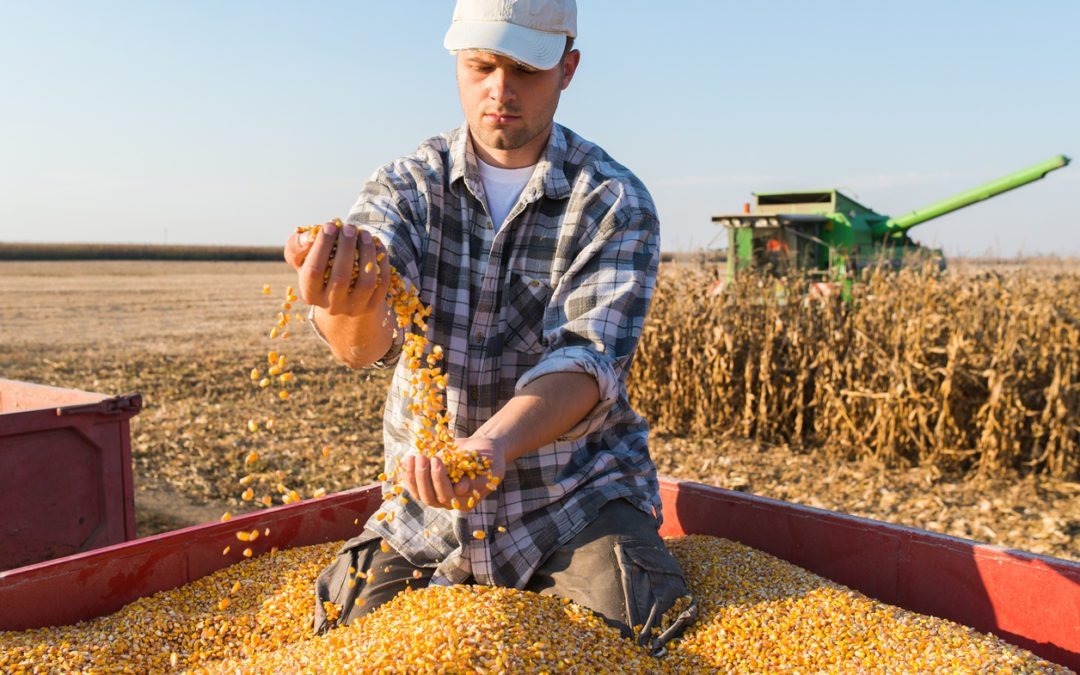 Kansas Farmers Get $218 Million in GMO Corn Lawsuit